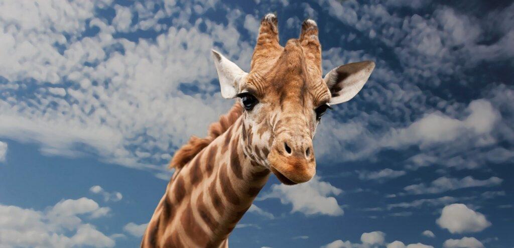 """Ilustracja do bajki """"Sprawa dla żyrafy"""""""